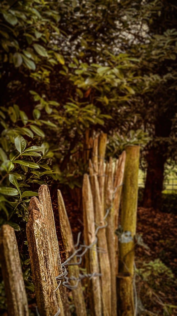 The Bokeh Effect | Award winning photography from the U.K. | T L Media